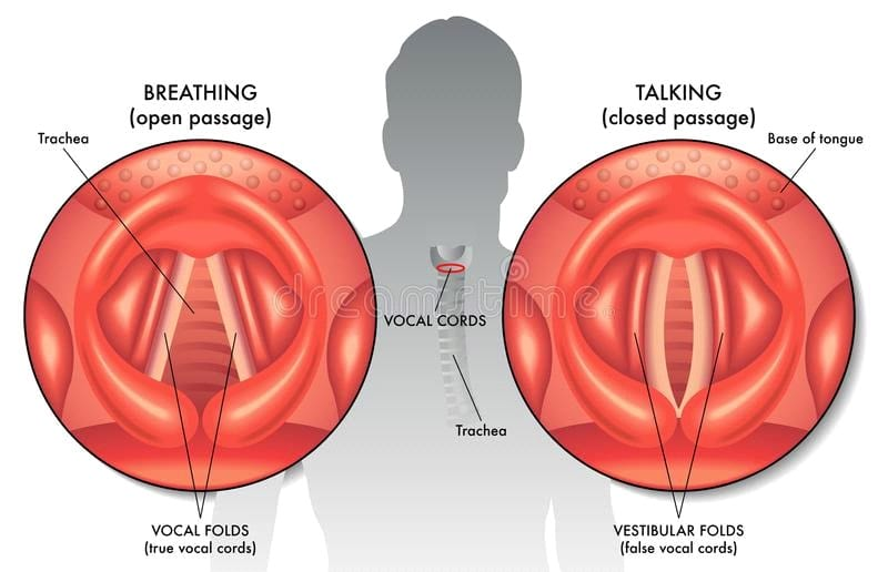 vocal anatomy for singers, school of music, singing lessons, learn vocal